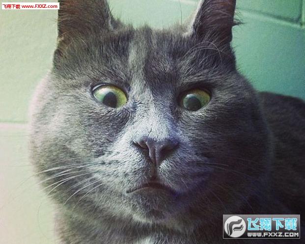 俄罗斯惊讶猫凯文表情包图片