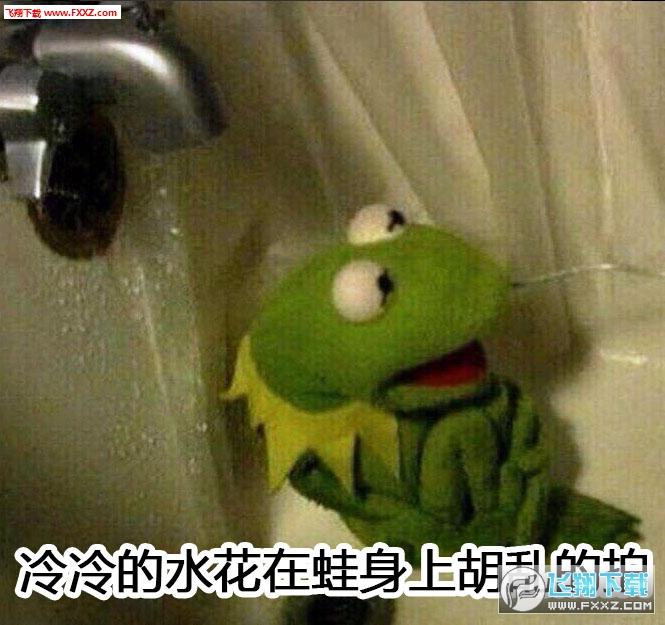 废蛙叫什么,这只废娃真名科米蛙kermit,被戏称疯狂的青蛙,继横店四瘫图片