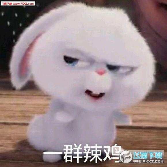 表情兔子合集完兔子|爱宠大表情机密图片无天都了整版包亮图片