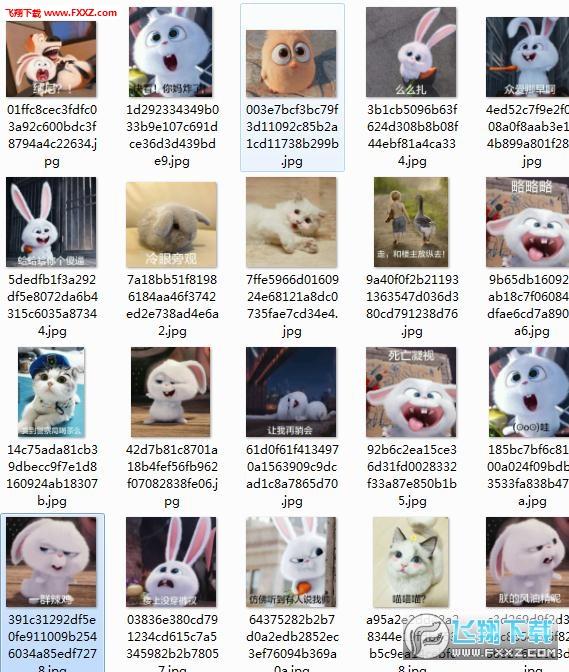 爱宠大整版兔子老师合集完表情|爱宠大机密兔杀画图片机密包如何图片