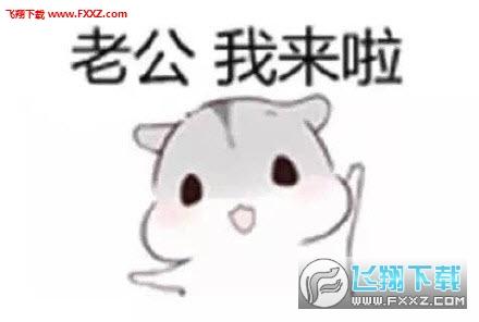 hamham仓鼠表情包老公版 哄老公专用仓鼠表情包安卓版完整版 飞翔下