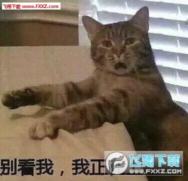 可爱猫咪萌宠图片聊天