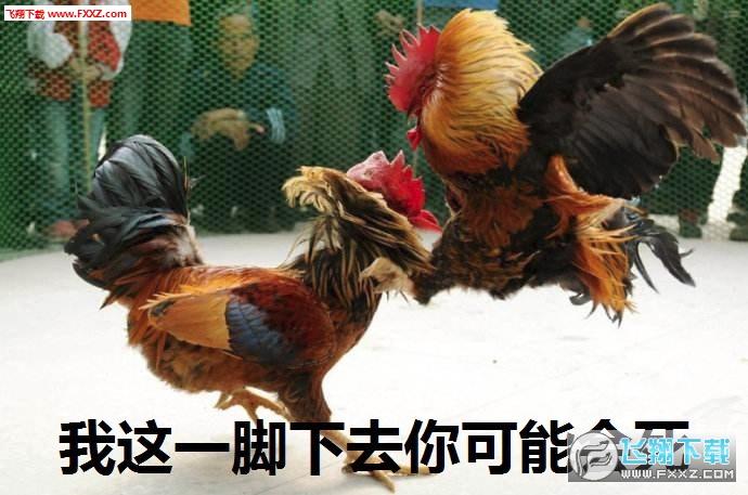 2017鸡年表情包 附文字