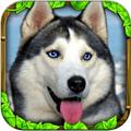 流浪狗模拟安卓版