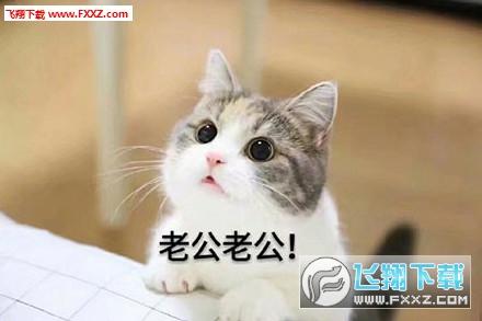这款表情包的小猫咪十分可爱,它的照片给大神修改成沉迷老公的表情包