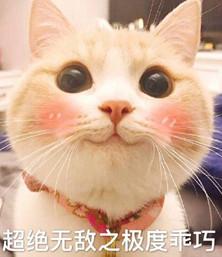 网红bobi猫表情下载的肚子qq图片饿表情包图片
