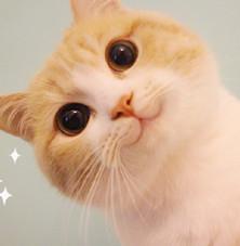 网红bobi猫表情下载揪包情让表不图片