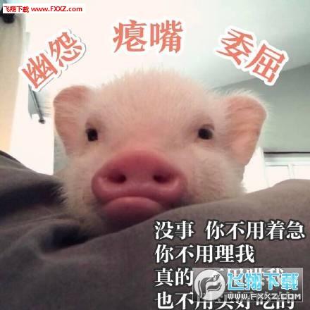 3,见过很多猪还是你最可爱; 4,小姐姐,今晚我要你陪我睡; 5,你看我像