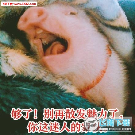 吸猪表情下载大全|吸猪表情高清版无水图片表情包图片印版悲剧图片