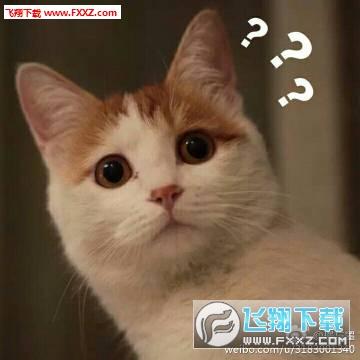 猫咪问号脸表情包是一款网络上十分有趣的猫咪问号系列表情包,满脸图片