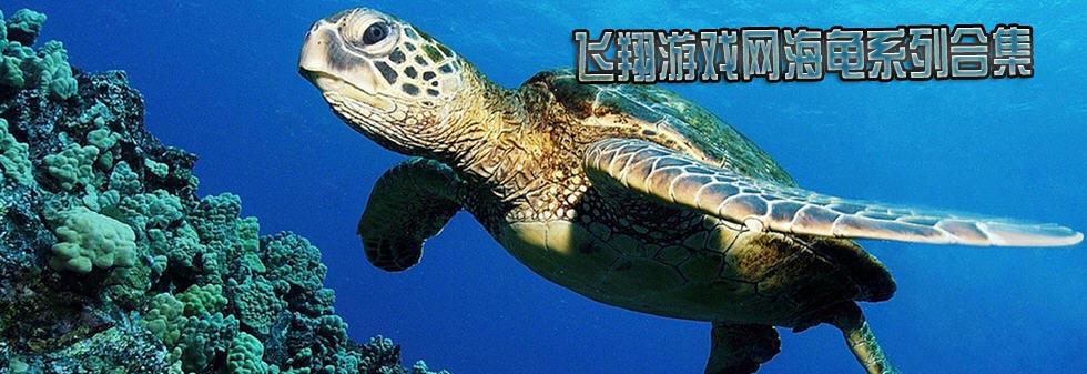 海龟_海龟游戏