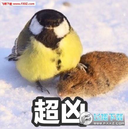 大山雀吃脑狂魔表情包截图1