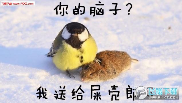 大山雀吃脑狂魔表情包截图3