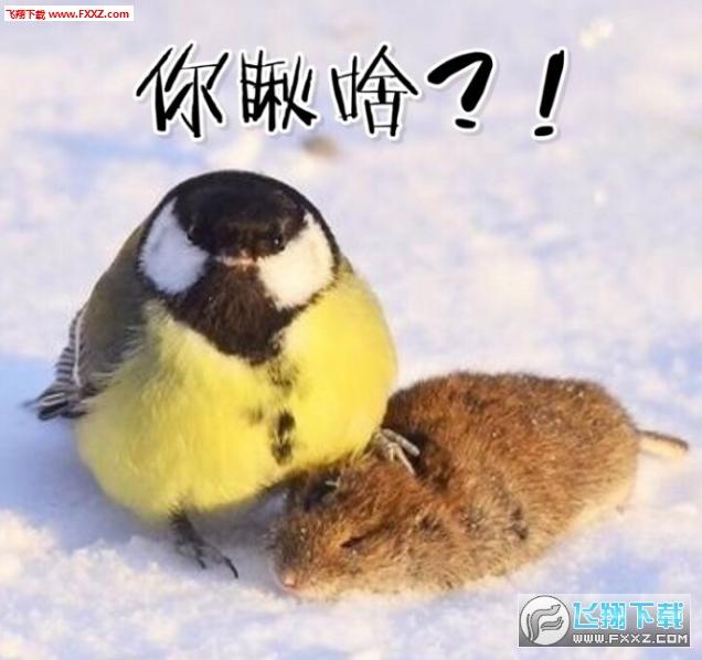 大山雀吃脑狂魔表情包截图4