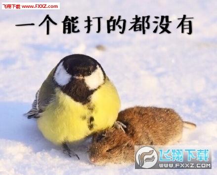 大山雀吃脑狂魔表情包截图0