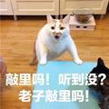 敲里吗猫咪表情高清无水印