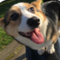 宠物对话交流器软件v1.0