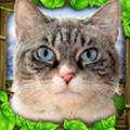流浪猫模拟游戏手机版1.0