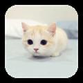 逗逗宠物app手机版1.96