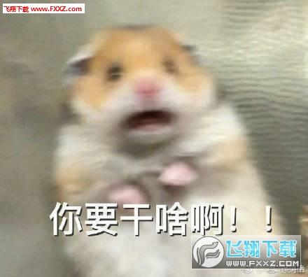 惊恐的小仓鼠表情包