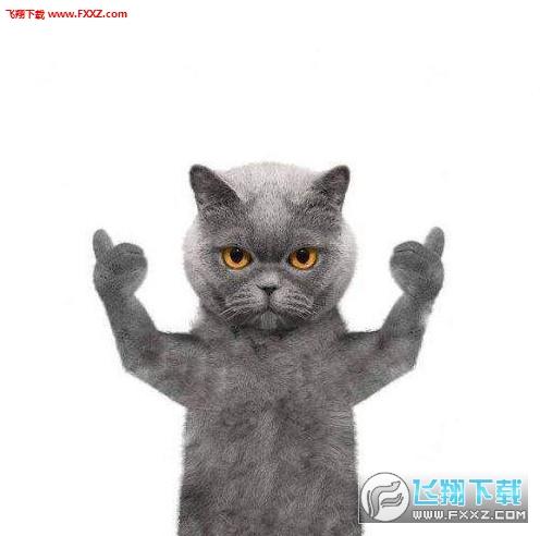 抖音蓝猫表情包