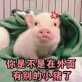 猪猪可爱表情包