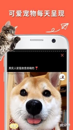 朋宠PECO手机版截图2