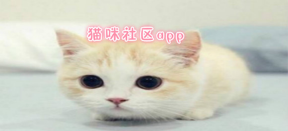猫咪社区app_猫咪社区破解版_猫咪社区官网版