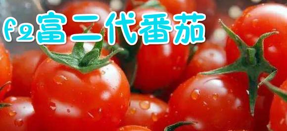 f2富二代番茄_富二代番茄社区_富二代在线番茄