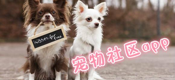 宠物社区app合集_宠物兴趣社区app_宠物社区app推荐