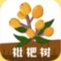 枇杷树贷款app v1.0.1