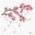 桃花瓣�J款app v1.0.1