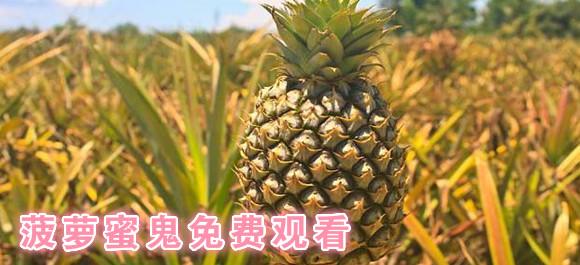 菠萝蜜鬼免费观看_菠萝视频无限看_免费菠萝视频app