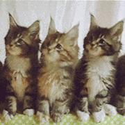 三只猫咪点头蹦迪图片高清