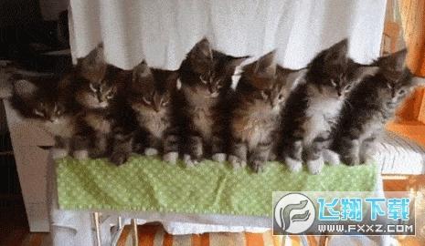 抖音评论三只猫咪点头图片全套