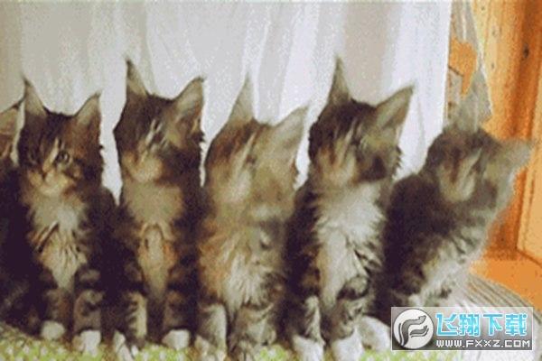 抖音评论三只小猫点头gif