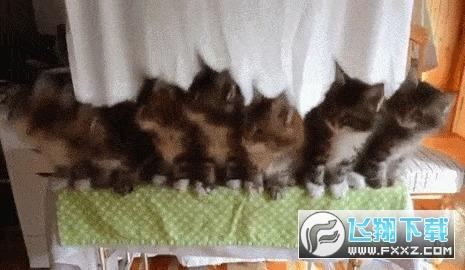 抖音三只小猫摇头gif
